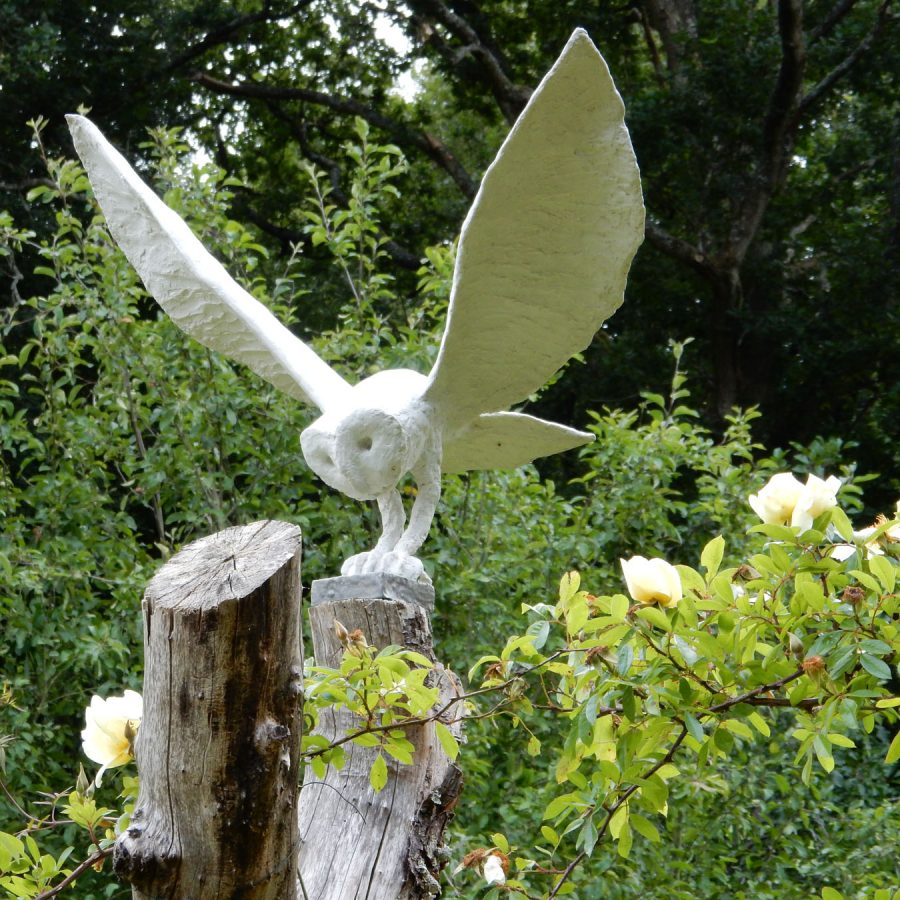 Barn Owl Striking